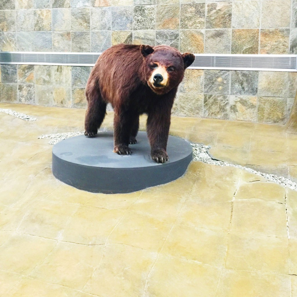 Kodiak Bear in the Anchorage Airport